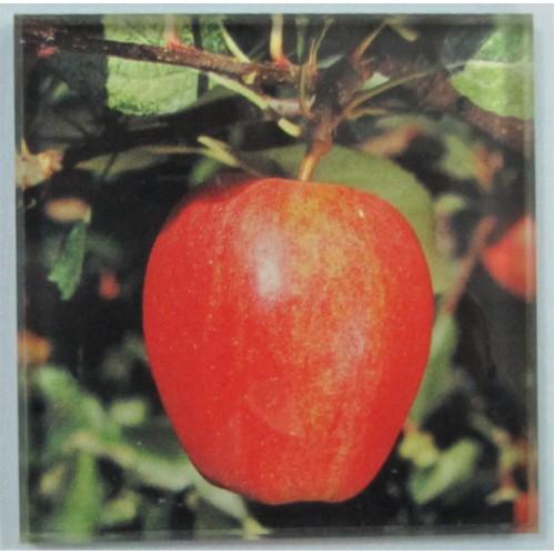 Зображення Підставка під чашку 100х100мм 011.9.11 - изображение 2
